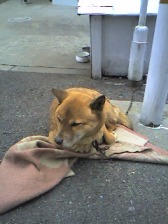 近所の犬.jpg